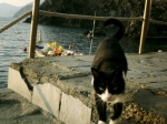 cinque-kitty