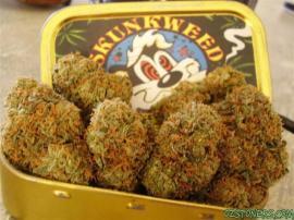 Skunkweed