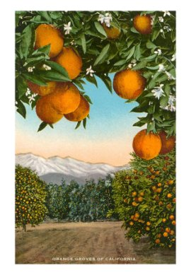 orange-grove-with-mountains-in-background