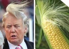 cob-and-corn